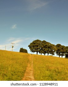 a stone pathway leading to the top of a hill in a summer meadow with a line of green trees and bright sunny sky with a direction sign in the distance