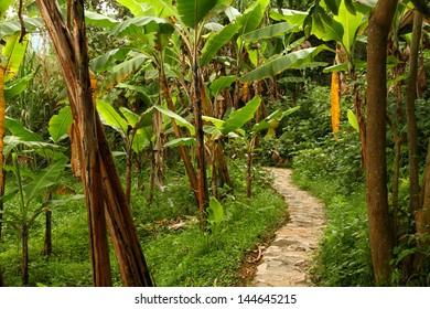 A stone pathway through a tropical jungle
