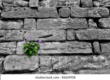 Stone rock wall with small purple flower growing on it