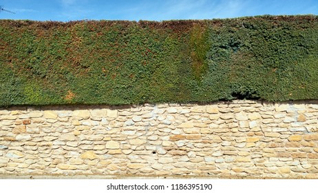 stone separation wall with hedge over