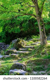 Stone slab stairs up a small hill under green tree