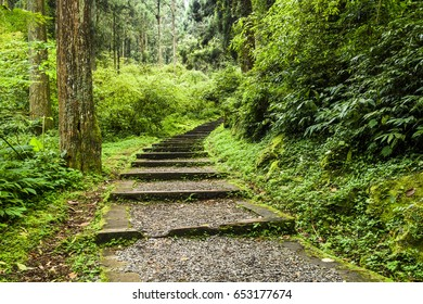 Stone stair in green forest