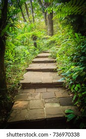 Stone stair in green tropical forest as part of hiking trail. Concrete brick staircase leading up a walkway through the jungle.
