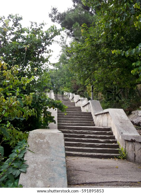 stone staircase to the top among green trees
