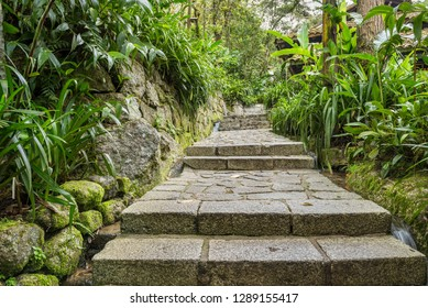 Stone staireway in jungle resort surround with vegetation