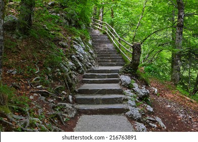 Stone stairs in green  forest.  Steps to waterfall Savica, Slovenia