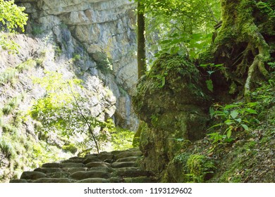 Stone stairs and the path that leads deeper in to the forest shot on a summer day