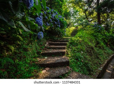 Stone steps in country garden. With beautiful blue hydrangea bushes. Magic Botanical Garden in Batumi, Georgia