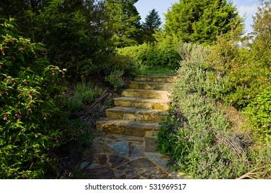 Stone steps in a lush garden