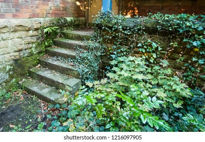 Stone steps overgrown with ivy