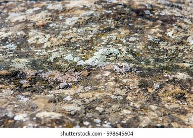 Stone surface with moss, Gobustan national park, Azerbaijan
