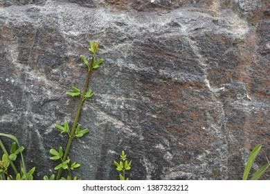Stone texture for blackground. Nature blackground.