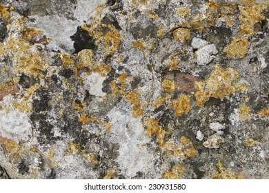 Stone texture with lichen