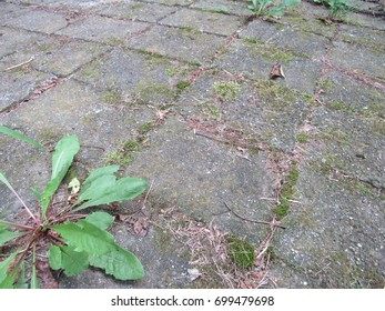 Stone tile with weeds growing in the cracks