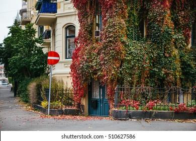 Stone townhouse covered Partnenotsissus. Autumn, Europe. City street.