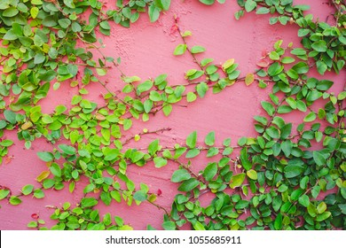Stone wall background and plant on the wall
