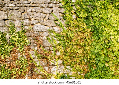 stone wall covered with grape leaves