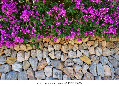 Stone wall decorated by bougainvillea flowers