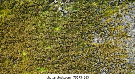 stone wall with green lichens and moss ,The wall is cracked  ( photo intended : contrast) texture,background