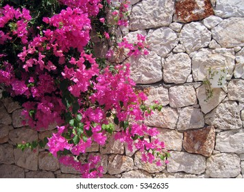 stone wall with ivy and flowers and begonvils