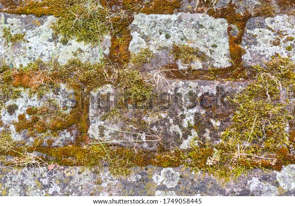Stone wall Moss and dry grass. Granite stones covered with moss. Rough surface. Moss in the joints. Historic castle wall. Ruins in the city.