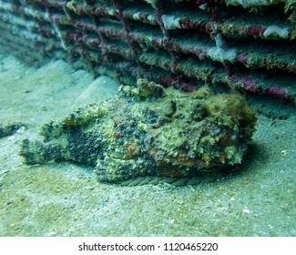 Stonefish on Sandy Bottom at Underwater Wreck
