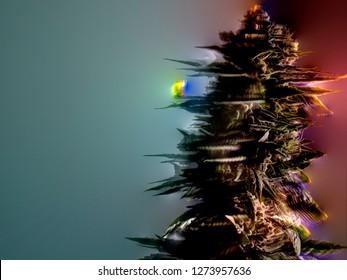 Stoner Art Trippy Cannabis Bud Multi Color Acid Hallucination Visualization Concept
