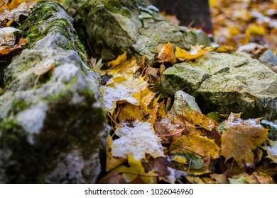 Stones in autumn leaves