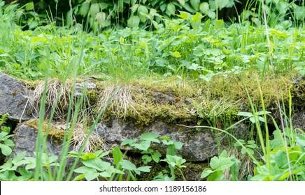 Stones different wild plants