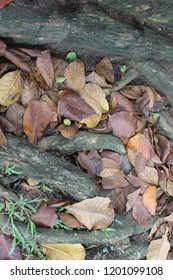 Stones and dry leaves on the ground next to tree roots