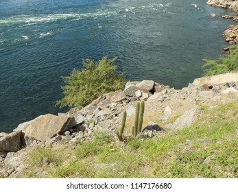 Stones, flowers and cacti on the banks of river, view from above