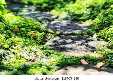 Stones pathway for step in garden