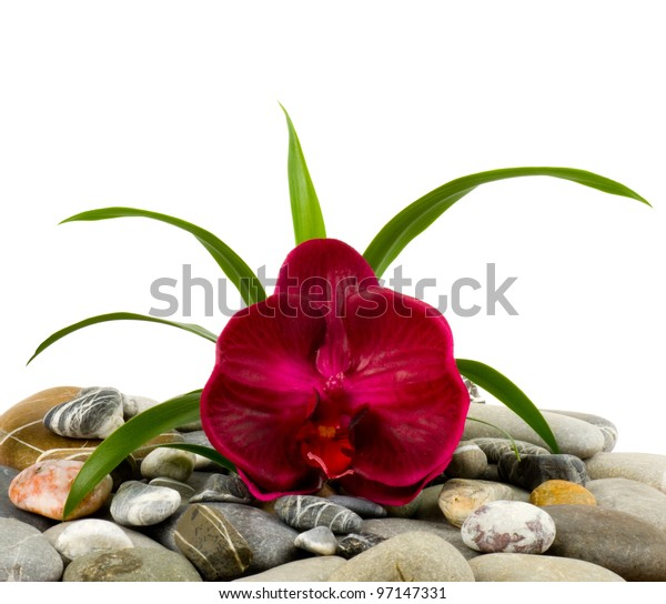 Stones and red orchid on the white background