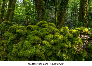 the stones of a wall covered with green moss