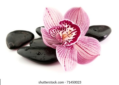 stones with water drops and orchid flower