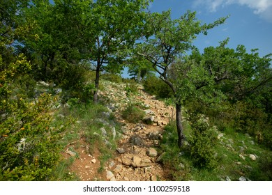 a stony path in the scrubland
