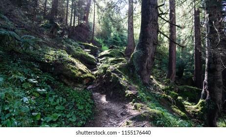 Stony path through the woods