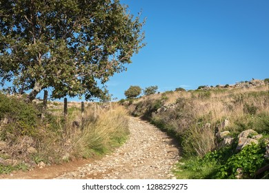 Stony road through the maquis shrubland  of Northern Corsica, France
