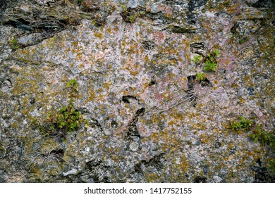 stony surface overgrown with moss, for backgrounds