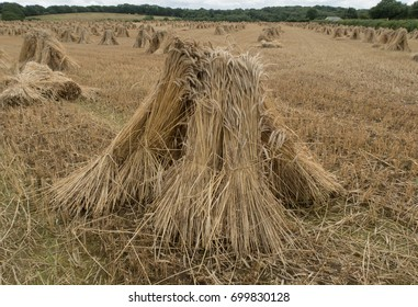 Image result for amish stooks