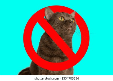 Stop cats. Cats as pathogens of allergies and other diseases. Portrait of a cat, with a crossed out red circle.