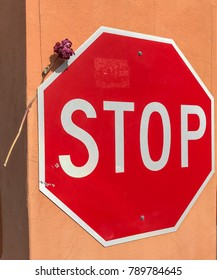 Stop sign with a dried flower