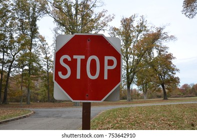 stop sign near forked road and trees