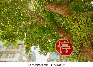 Stop sign with trees and green leaves. The Chinese word means stop.