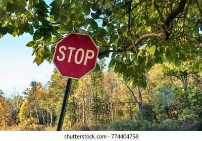 stop sign under tree limb at forest