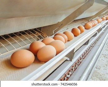 Stopped conveyor production line of chicken eggs of a poultry farm. Limited depth of field.