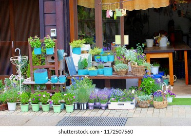 Store front of a floristry, display of  garden plants, trendy home decorations and flowers in blue pots