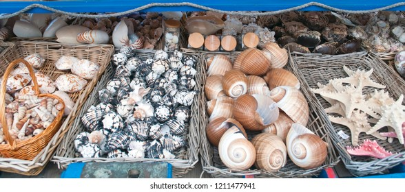 Store where you can see various invertebrate animals of the sea as shells and starfish