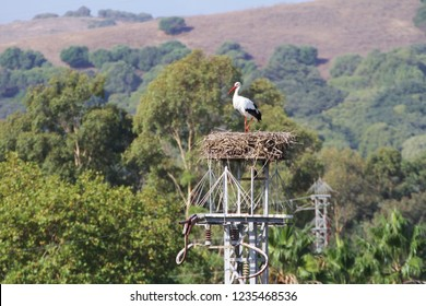 Stork above a nest placed on a electric tower.