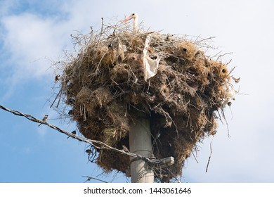 Sparrow Head Images, Stock Photos & Vectors | Shutterstock